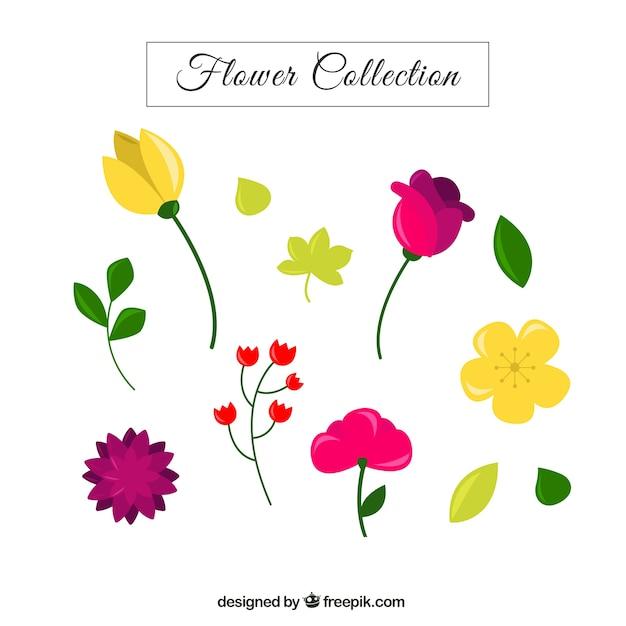 Bonitas Plantas Con Flores Y Hojas Descargar Vectores Gratis