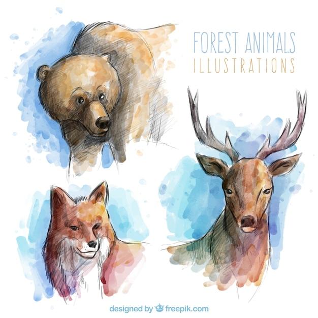 Bonitos Y Realistas Animales Del Bosque En Efecto Acuarela