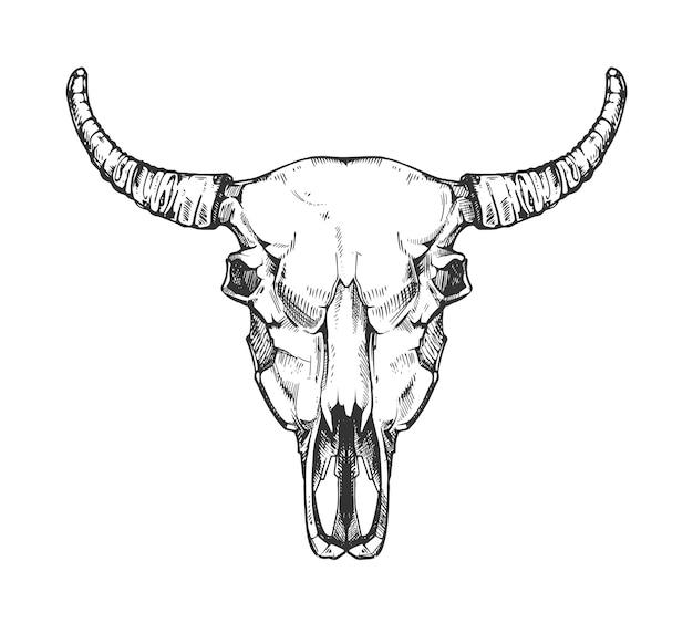 Bosquejo de cráneo de búfalo vintage. cabeza de toro animal huesos en estilo dibujado a mano. cabeza de vaca con cuerno Vector Premium