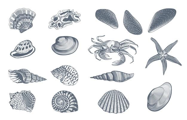 Bosquejo, océano, naturaleza, conjunto vector gratuito