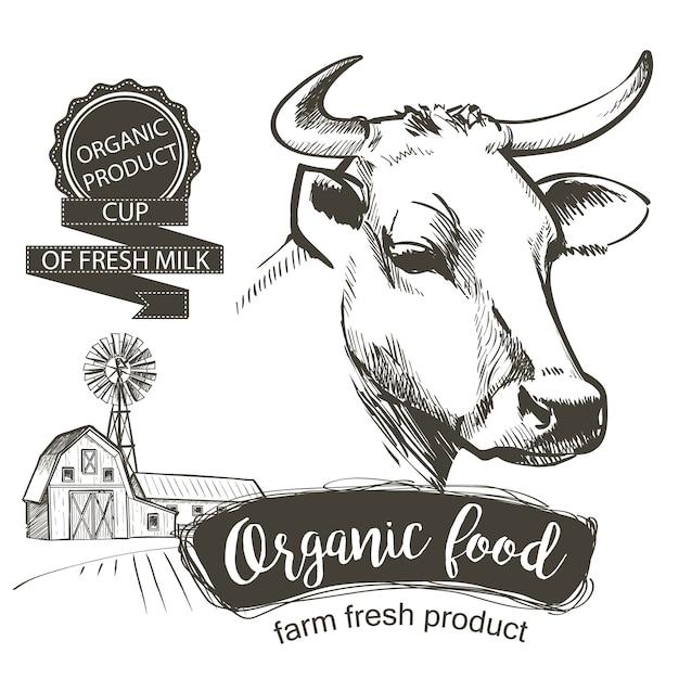 Cabeza de las vacas dibujado a mano en un estilo gráfico. ilustración de vector vintage grabado Vector Premium