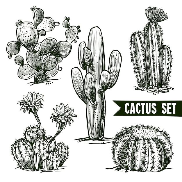 Cactus sketch set vector gratuito
