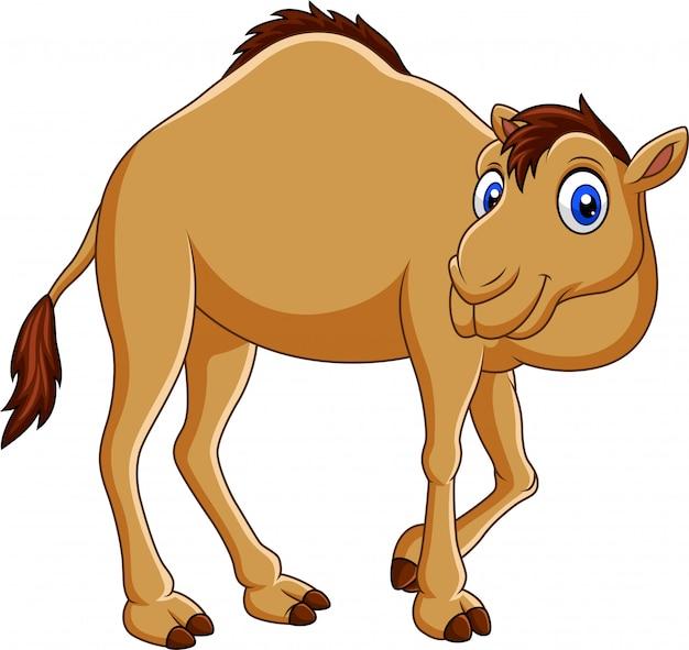 Camello de dibujos animados aislado sobre fondo blanco Vector Premium