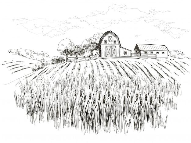 Campo de trigo Vector Premium