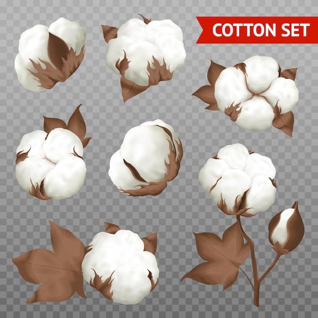 Cápsula de algodón madura vector gratuito