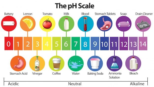 Un cartel educativo de la escala de ph vector gratuito