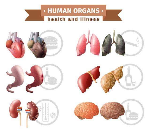 Cartel médico de los riesgos de heath de los órganos humanos vector gratuito