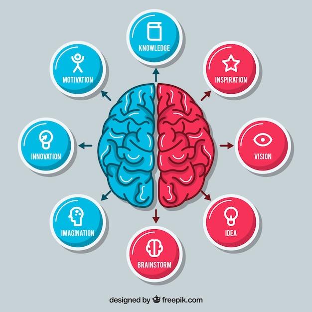 Cerebro dibujado a mano con iconos  Vector Gratis
