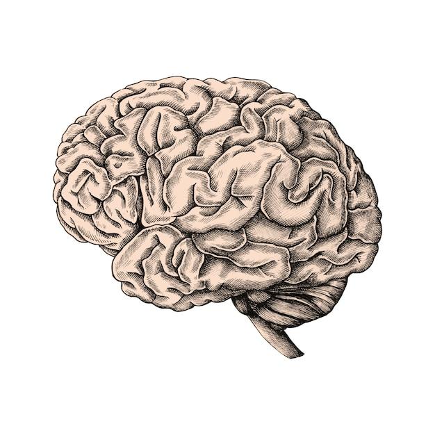 Cerebro humano dibujado a mano vector gratuito