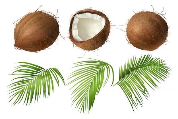 Coco entero y roto con hojas de palma verde. vector gratuito