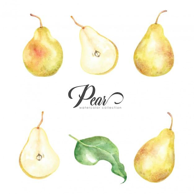 Colección de acuarela estilo pera amarilla Vector Premium