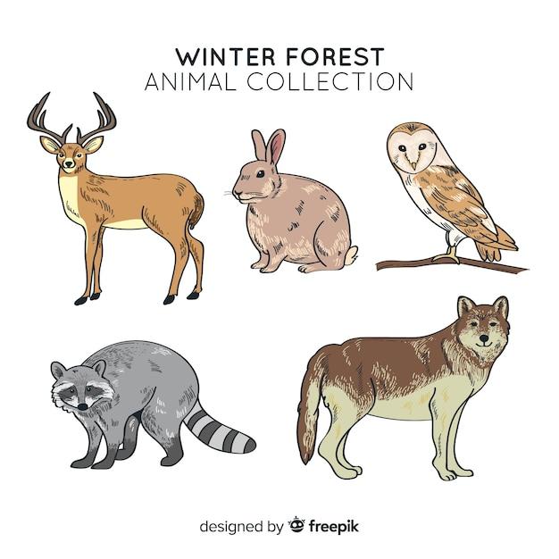 Colección de animales de bosque en invierno vector gratuito