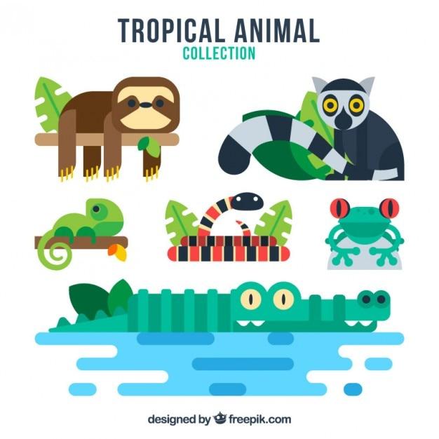 Colección de animales tropicales a color vector gratuito