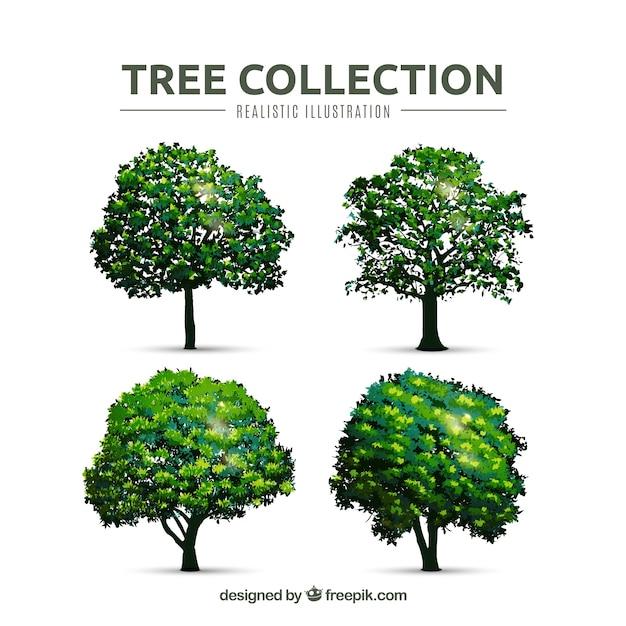 Colección de árboles en estilo realista vector gratuito