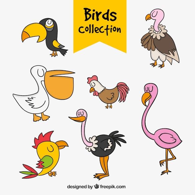 Colección de aves dibujadas a mano vector gratuito