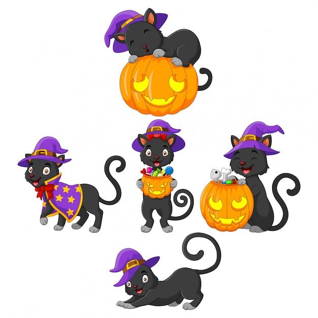 Colección black cat con calabaza Vector Premium