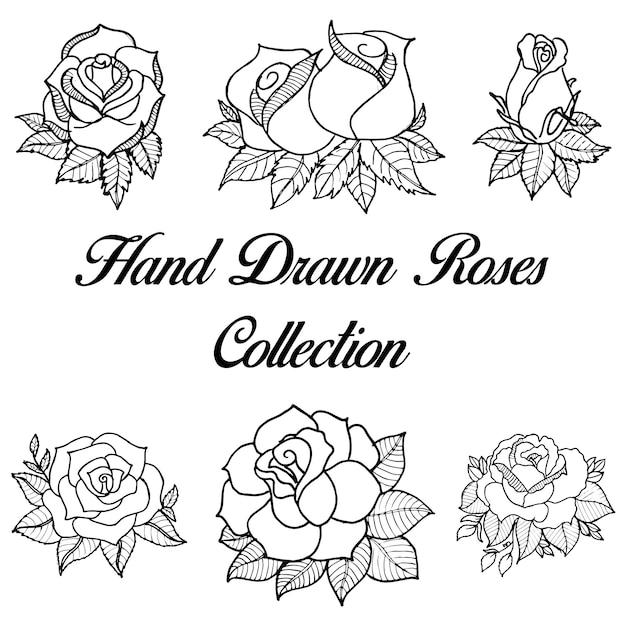 Colección Blanco Y Negro Dibujada Mano De Las Rosas Descargar