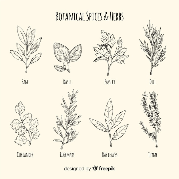 Colección bocetos de especias y hierbas realistas dibujados a mano vector gratuito
