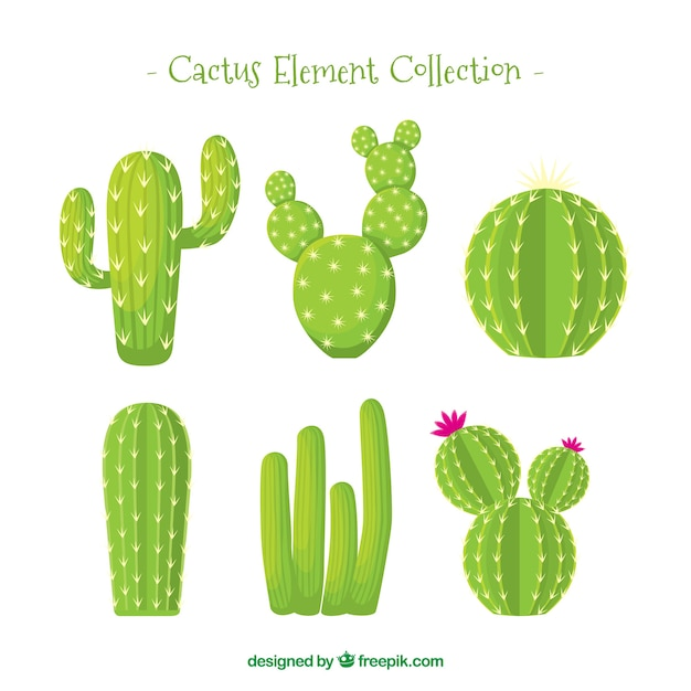 Colección de cactus con estilo natural Vector Premium