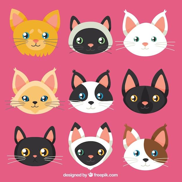 Colección De Caras De Gato Descargar Vectores Gratis