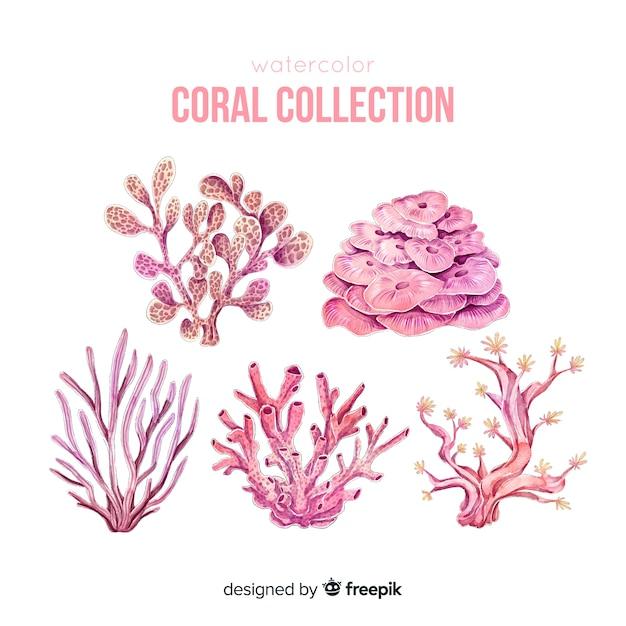 Colección colorida coral dibujado a mano vector gratuito