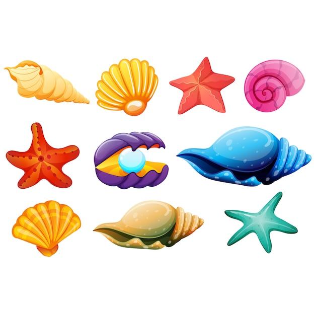 Colección de conchas a color Vector Premium
