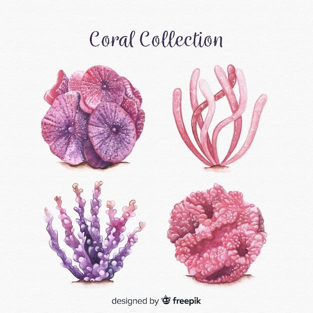 Colección de corales en acuarela vector gratuito