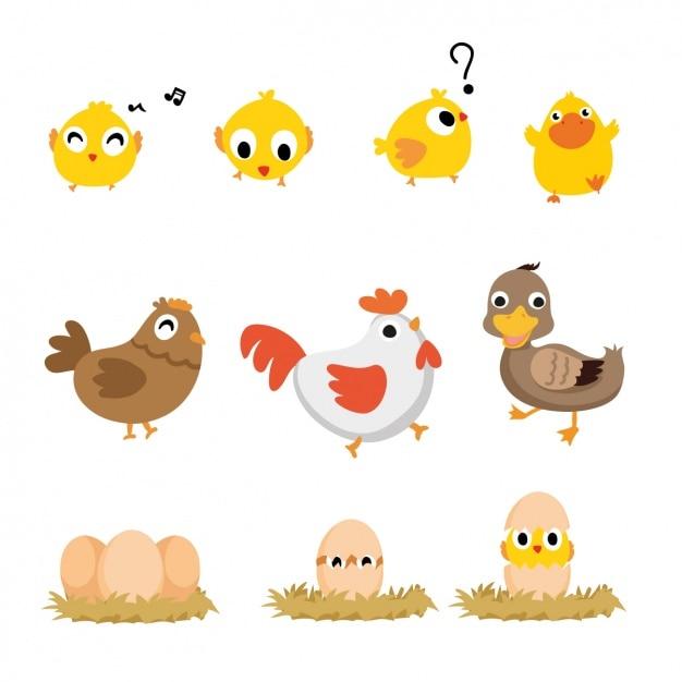 Colección de aves a color Vector Gratis