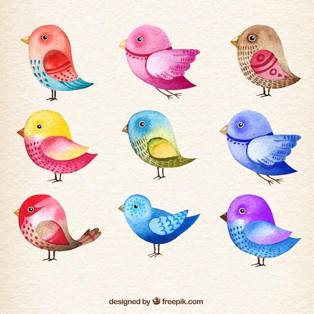 Colección de pájaros de acuarela Vector Gratis