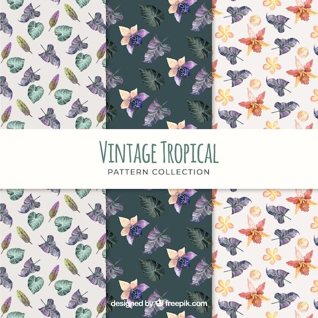 Colección de patrones tropicales en estilo vintage   Descargar ...