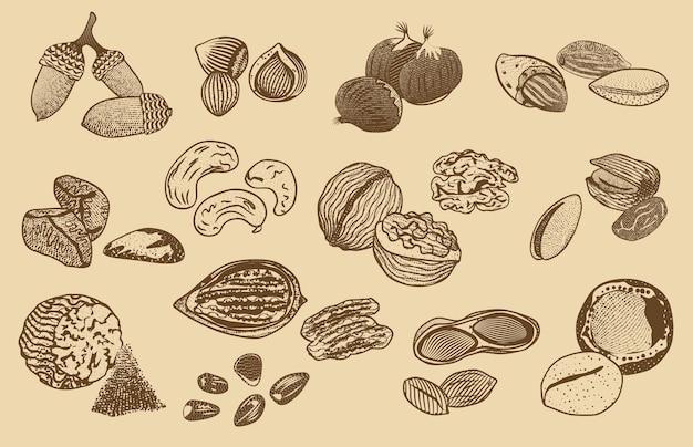 Colección de elementos de frutos secos orgánicos naturales vector gratuito