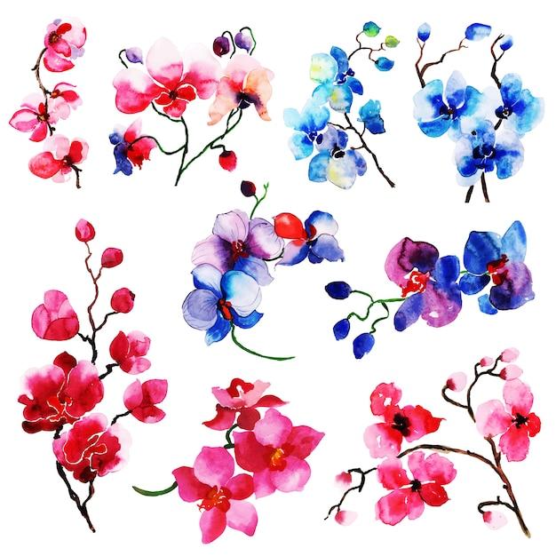 Colección floral y elementos de hojas de acuarela de verano ...