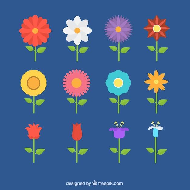 Coleccion De Flores De Colores En Diseno Plano Descargar Vectores