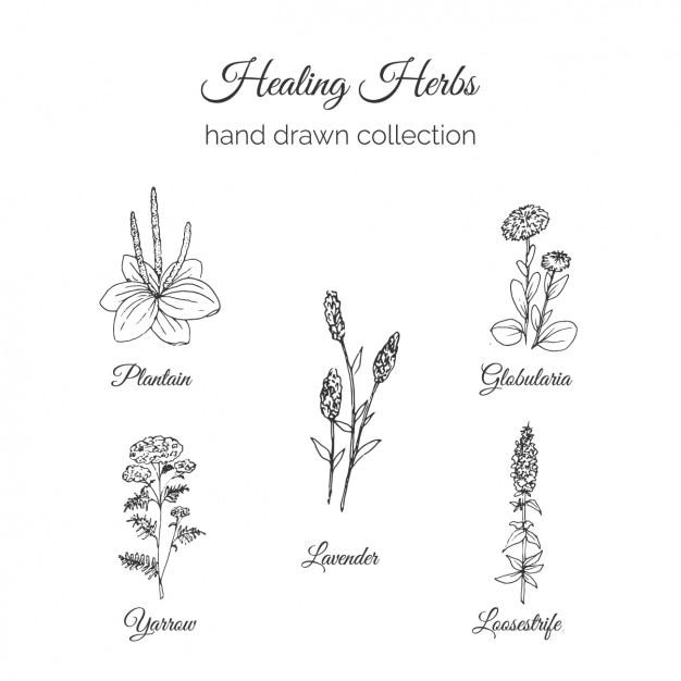 Colección de flores dibujadas a mano vector gratuito