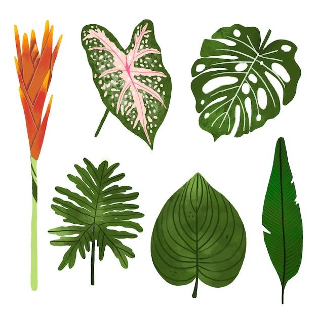 Colección de flores y hojas tropicales vector gratuito