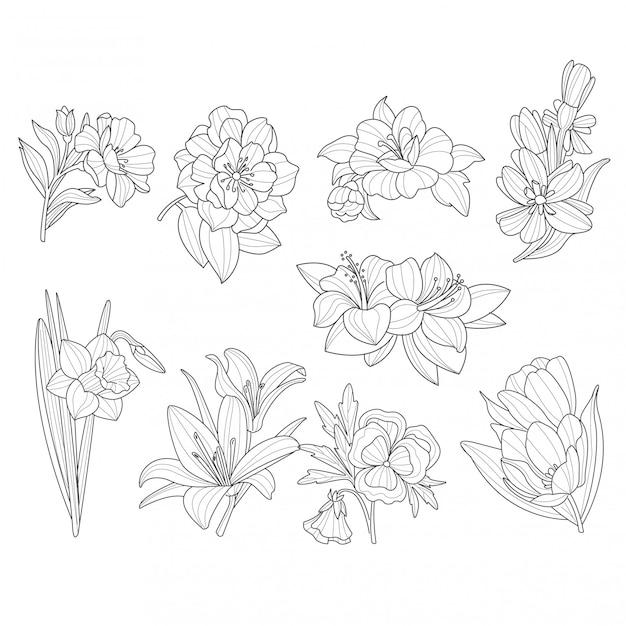 Colección de flores. ilustración dibujada a mano | Vector Premium
