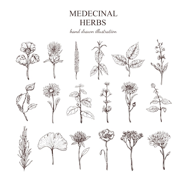 Colección de hierbas medicinales dibujadas a mano vector gratuito