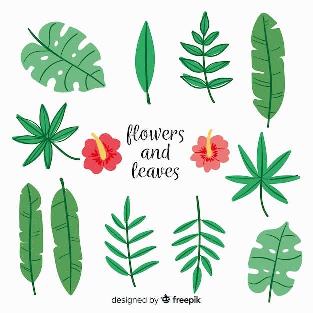Colección de hojas y flores dibujadas a mano vector gratuito