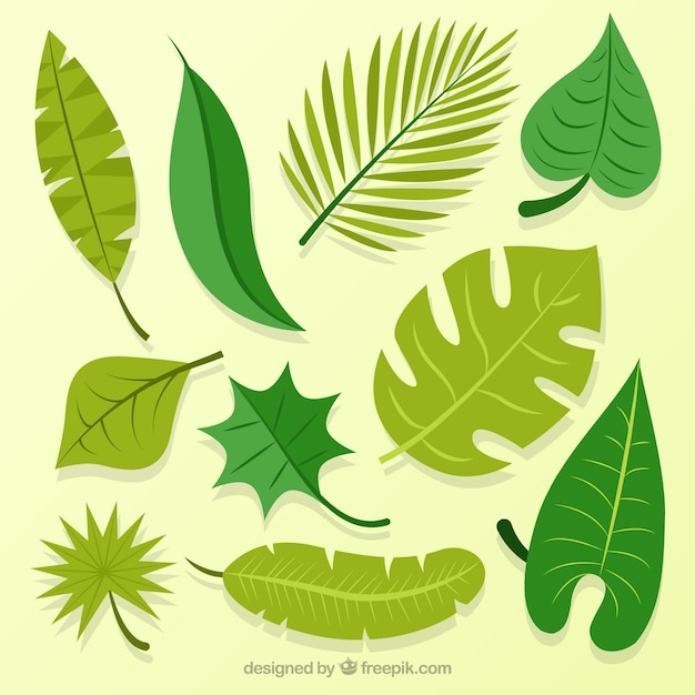 Colección de hojas de palmeras dibujadas a mano | Vector Gratis