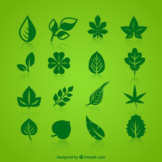 Colección de hojas verdes iconos Vector Premium