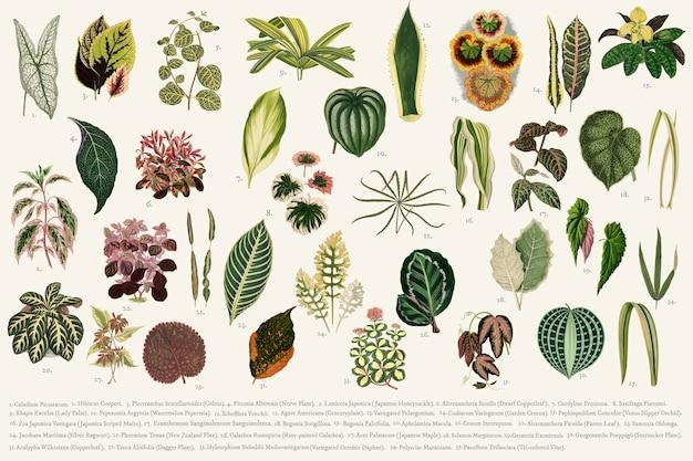 Colección de hojas vector gratuito