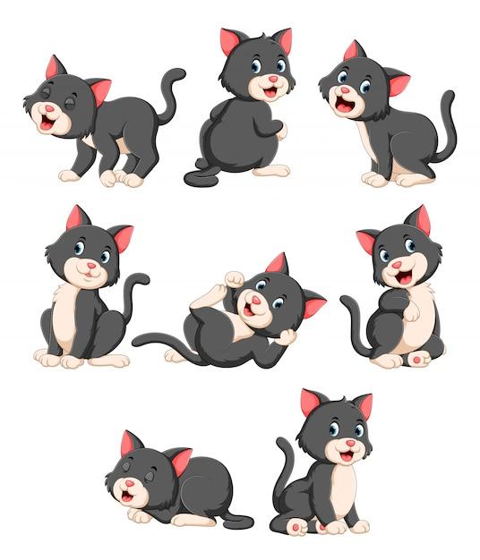 Colección de lindo gato con varias poses Vector Premium