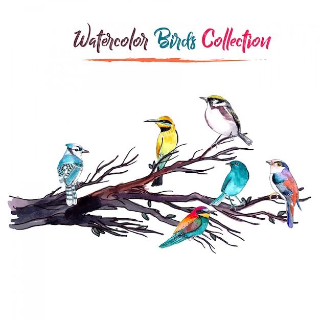 Colección de los pájaros de la acuarela vector gratuito