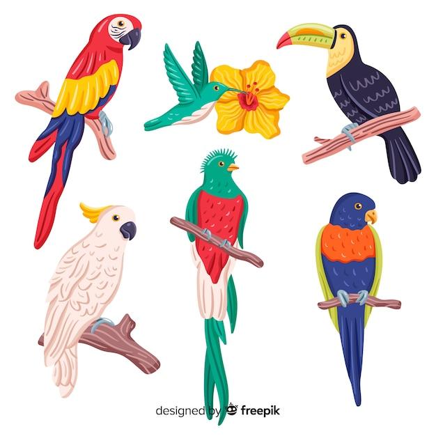Colección pájaros exóticos dibujados a mano vector gratuito