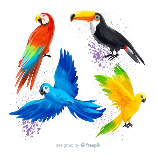 Colección de pájaros exóticos estilo acuarela vector gratuito