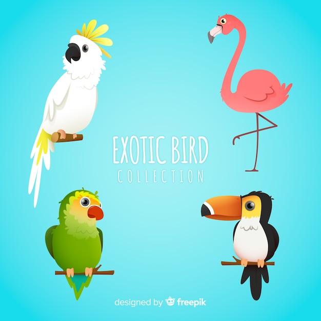 Colección pájaros exóticos estilo plano vector gratuito