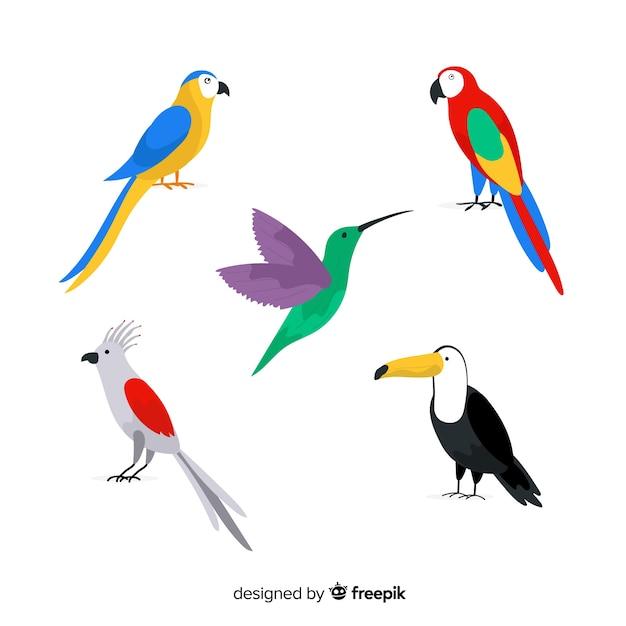 Colección de pájaros salvajes tropicales exóticos vector gratuito