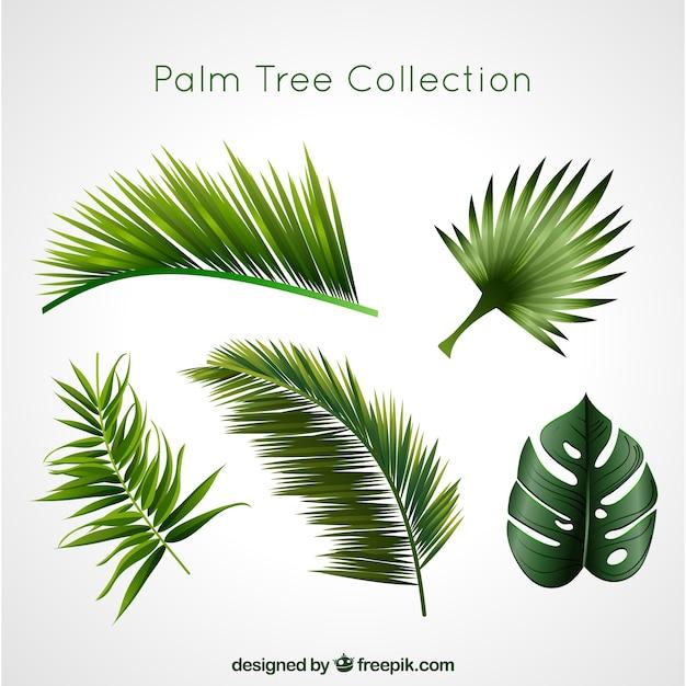 Colección de palmeras vector gratuito