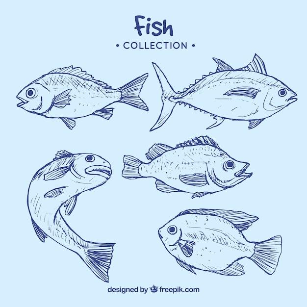 Colección de peces azules Vector Premium