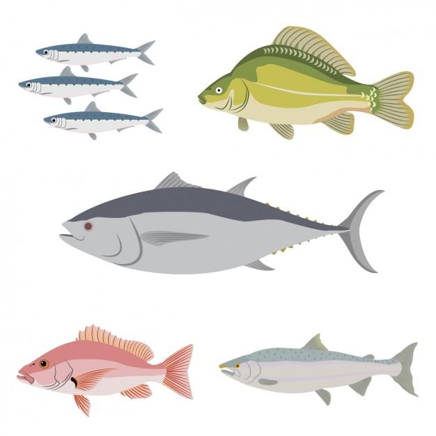 Colección de pescados a color vector gratuito